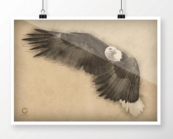 fauna orzeł amerykański plakat