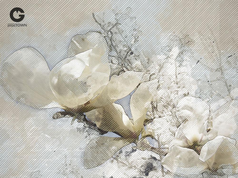 magnolia2-5