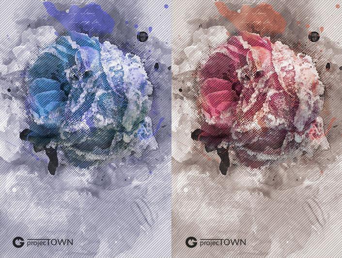 roza1-3